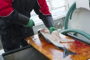Fish cutting safety