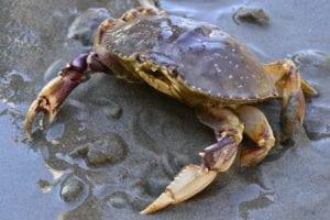 Crabbing safety