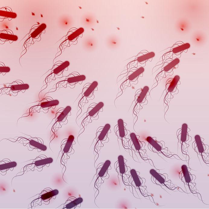 E. coli contamination
