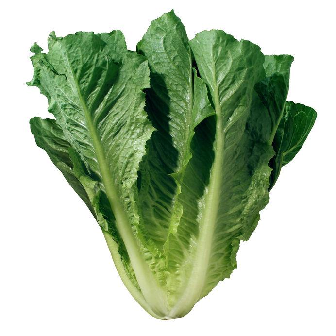romaine lettuce recall